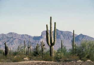 Organ Pipe Cactus National Monument (66 images)
