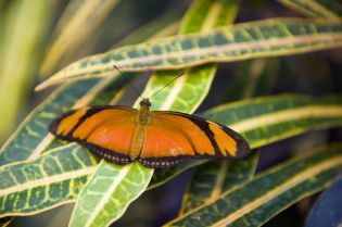 butterfly house (31 images)