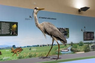 Natural Historic Museum Piacenza (33 images)