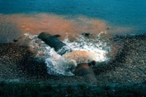 water pollution (34 images)
