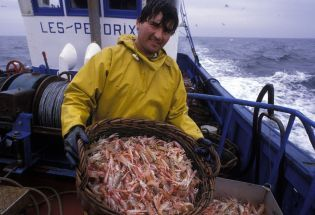 fish from Brittany (133 images)