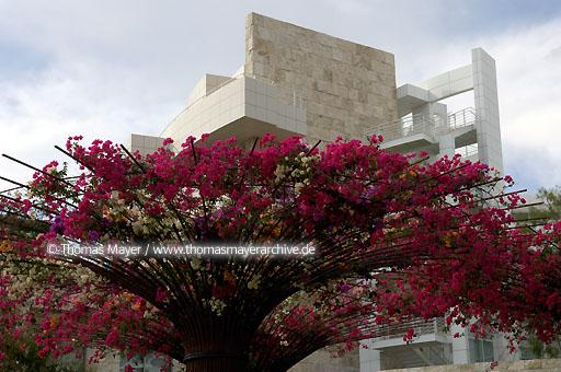 The Getty Center Los Angeles The Getty Center presents the Getty's collection of Western art from the Middle Ages to the present against a backdrop of dramatic architecture by Richard Meier, tranquil gardens, and breathtaking views.  020AN20051016D4200