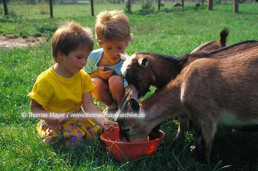 Lower Rhine Lower Rhine, farm for children in Neuss, Germany, children feed goats  106AA19970605A0060