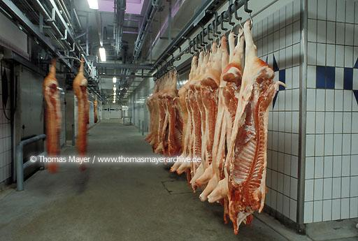 Norddeutsche Fleischzentrale, slaughterhouse Emstek Germany, slaughterhouse of Norddeutsche Fleischzentrale NFZ in Emstek, half porks in cool storage room  065AA19970225A0028
