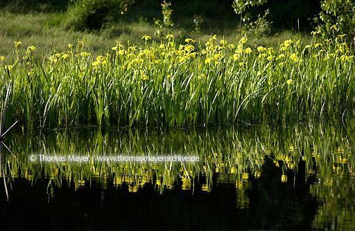 Thomas mayer archive reise deutschland wasser for Wassertiere im teich