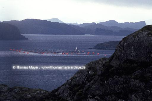 Salmon breeding, Norway Salmon farming near island Sotra, Norway  115AB19910512A0020