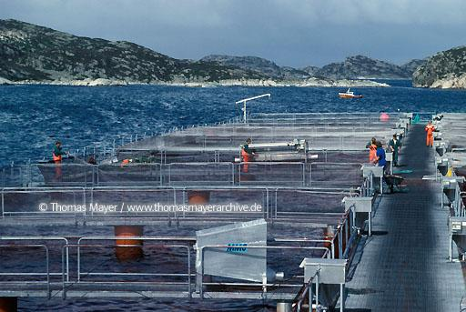 Salmon breeding, Norway Salmon farming near island Sotra, Norway  115AB19910512A0031